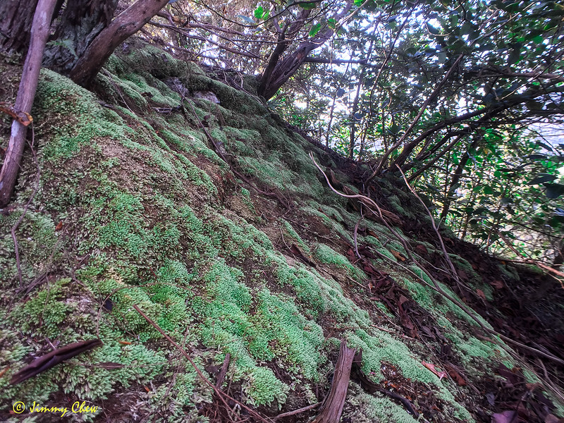 Some moss exists over some parts of the peak.