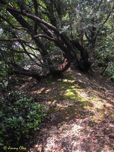 Narrow path.