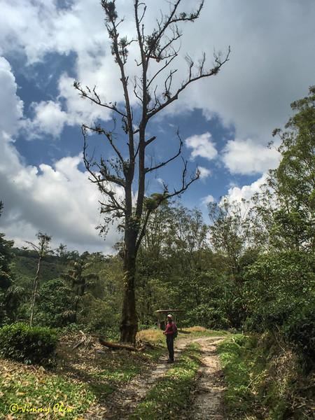 Muru with the barren tree.