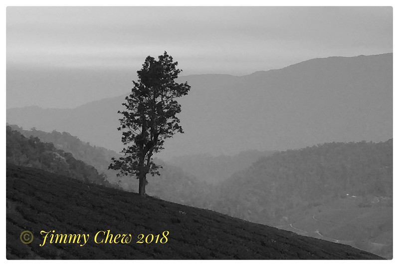 Solitary tree across MNS chalets.