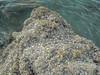 Massive!<br /> <br /> #CapeRachado #TanjungTuan<br /> #shells