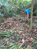 I and SS Tan cleared the way from the main path to the dumpsite - that's about 10 metres - shortest distance for the rubbish transfer.