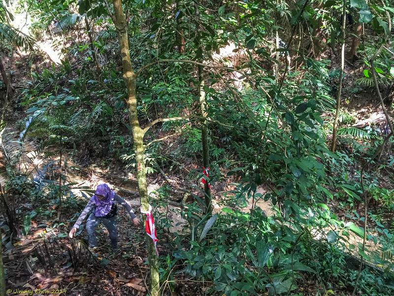 Jungle Fowl trail