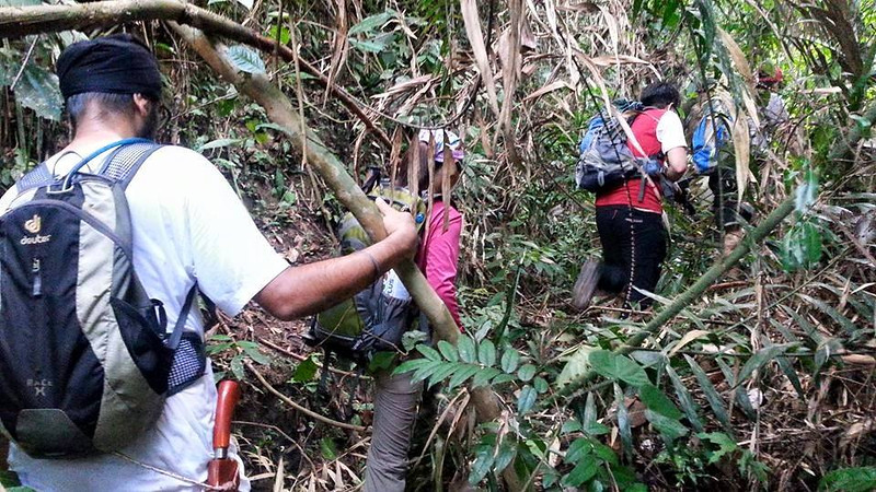 The non-tame forest where no trail exists.<br /> <br /> Photo credit: GC Khoo