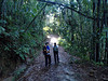 OLYMPUS DIGITAL CAMERA<br /> Bamboo trees along the way.