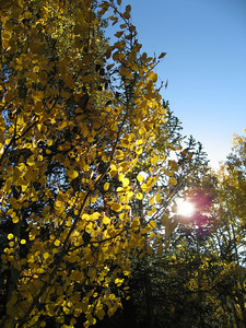 On the drive up to Aspen we were treated to the site of the fall turning of the Aspens.