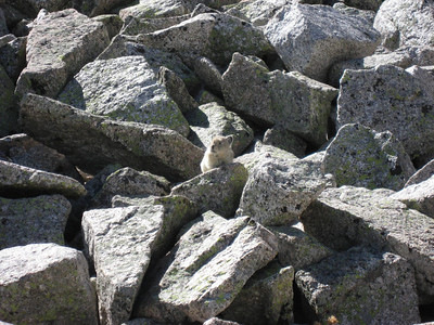 A curious pika actually came quite close to us on the way back down.