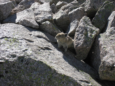 Natural little climbers. Notice the back foot bracing against the rock.