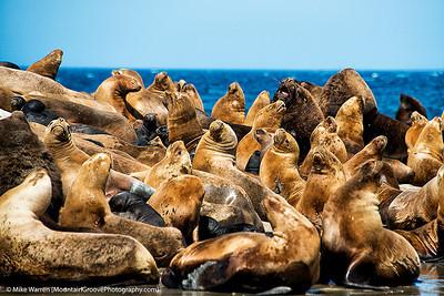 Lobos Marinos (Sea Lions), Peninsula Valdes, Patagonia, Argentina