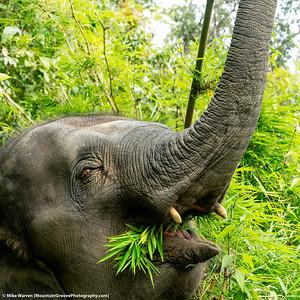 Elephant, Chiang Mai, Thailand