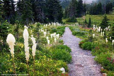 Bear Grass, MRNP, WA