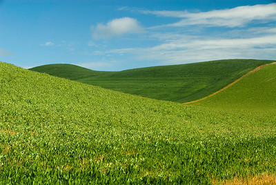 Bliss, Palouse, WA