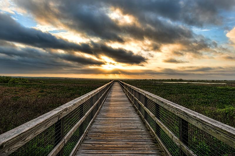 Sunrise, Paynes Prairie, FL