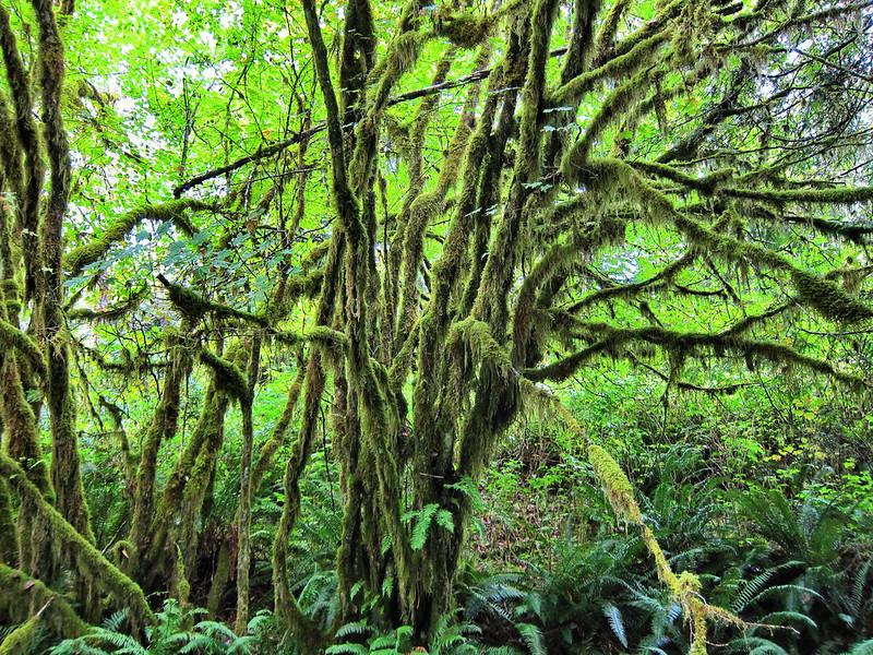 Mossy Splendour
