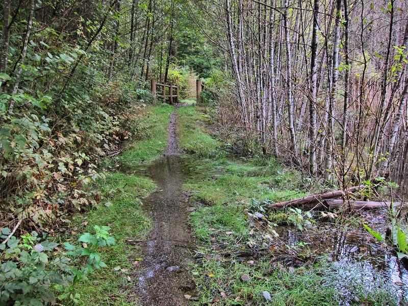 Sunken Forest Trail