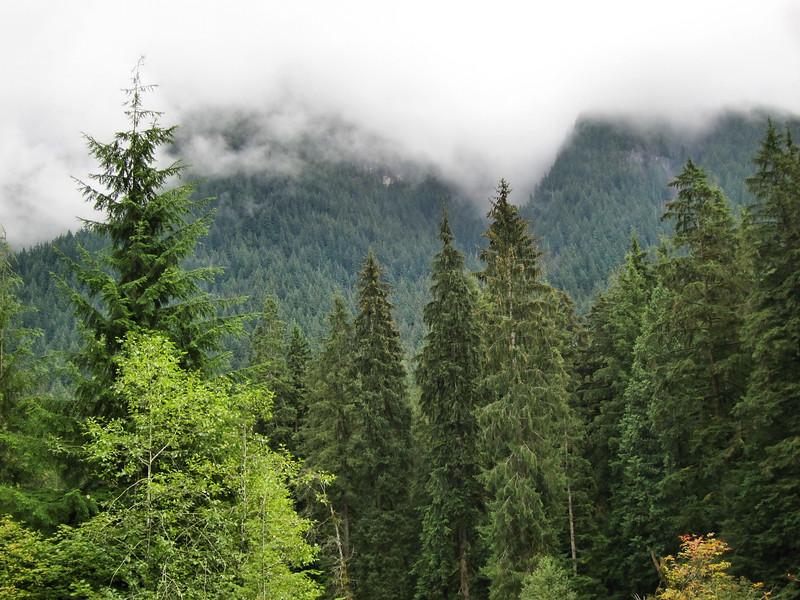 Western Flanks of Mount Seymour