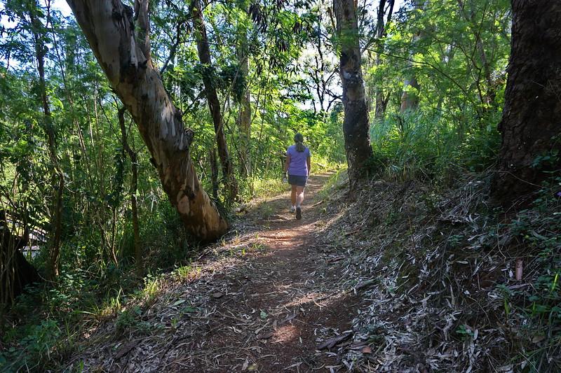 Walking Past Rainbow Eucalyptus Tree