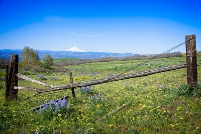 Dalles Mt Ranch Loop