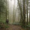 <I>Lost in Mist!</I>