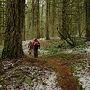 The Foxglove Trail
