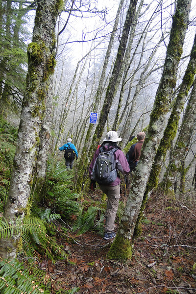 The Canyon Trail begins on an old logging road.