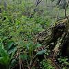 Cynthia Creek Bog