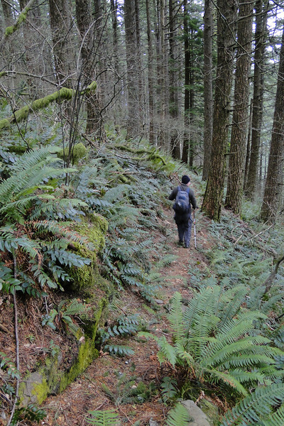 This trail heads West from the view point at the end of the old logging road - Part of the old Russ Jolley trail perhaps?