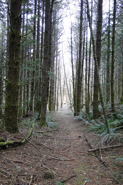 Old Logging Road down to the Gable Creek Crossing.