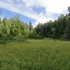 Larch Mountain Crater Meadow.