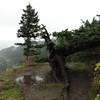 Fallen Tree View Point.