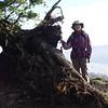 Fallen tree Lookout