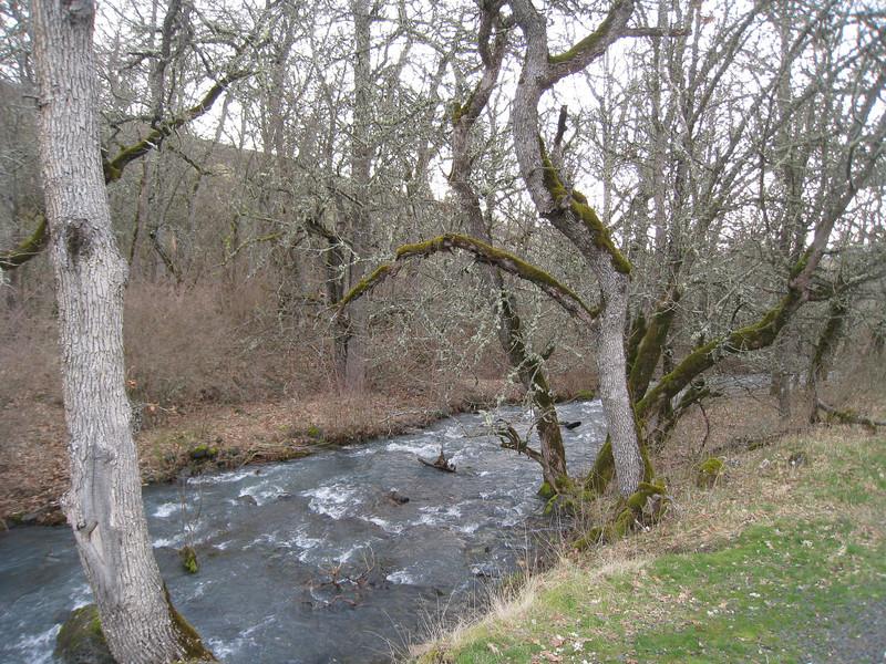 Catherine Creek near the bridge crossing. <FONT SIZE=1>© Chiyoko Meacham</FONT>