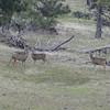 Some Deer!