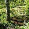 Cedar Ridge Saddle Spring