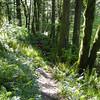 Dick Thomas Trail