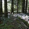 Cedar Ridge trail.