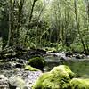 Hamilton Creek.