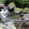 Hamilton Creek.<br /> Old Logging Cable.