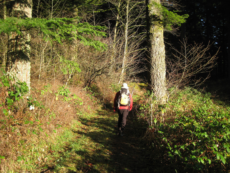 Walking through High Valley <FONT SIZE=1>© Chiyoko Meacham</FONT>