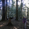 The Cruzatt Loop.<br /> The Enchanted Forest.