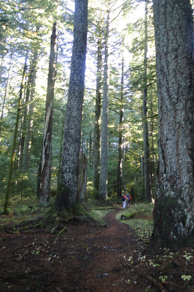 Spur trail to the Multnomah Basin Road.