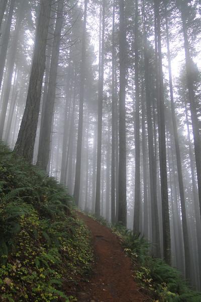 Devils Rest trail.