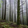 Dog Mountain <I>The Old Trail</I>