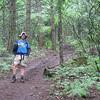Dog Mountain <I>The Old Trail</I> <FONT SIZE=1>© Chiyoko Meacham</FONT>