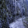 Ice on the Lower Eagle Creek Trail.
