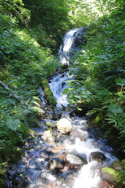 Maiden Hair Falls<br /> (Munra Creek)