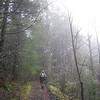 Greenleaf Falls Trail. <FONT SIZE=1>© Chiyoko Meacham</FONT>