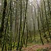 Greenleaf Falls Trail.