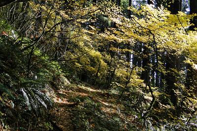 Old Hamilton Mountain Trail