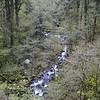 Hardy Creek below the Falls.